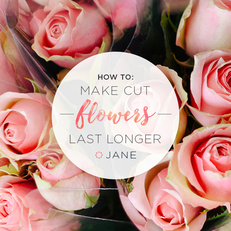 How To Make Cut Flowers Last Longer Jane Blog Jane Blog