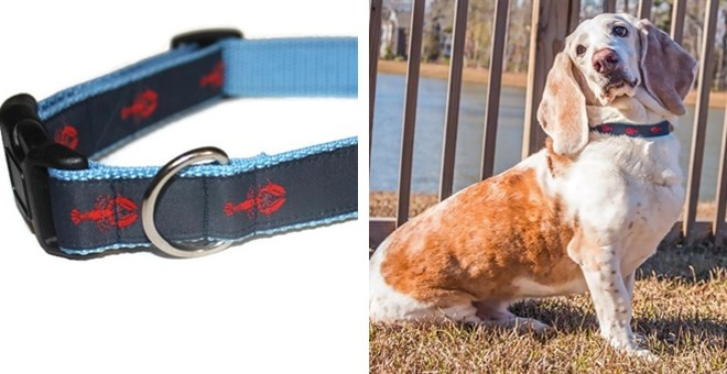 Nautical Dog Collars